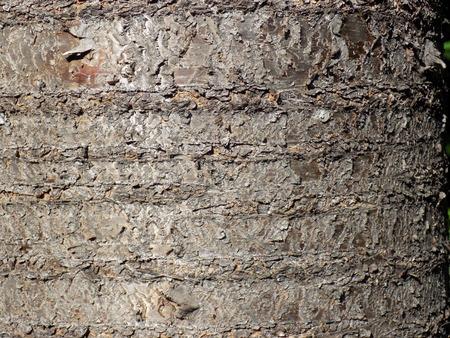 bark texture: Cherry tree bark texture Stock Photo