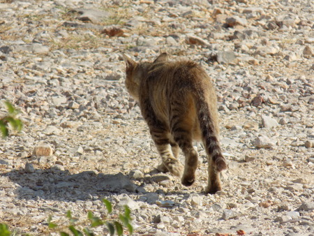 trot: Cat gets trot