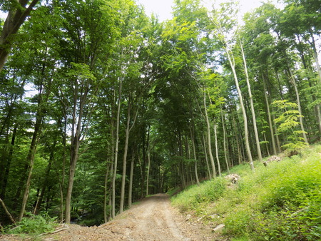 deciduous forest: Road in deciduous forest