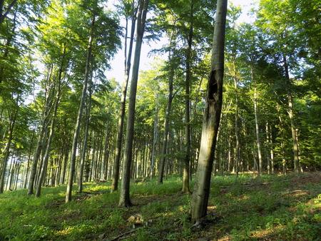 deciduous forest: Deciduous forest