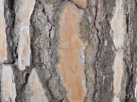 florae: Tree bark texture