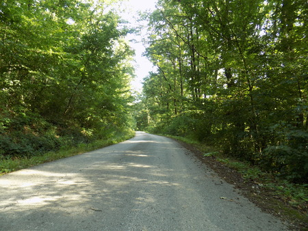 greenwood: Road in deciduous forest