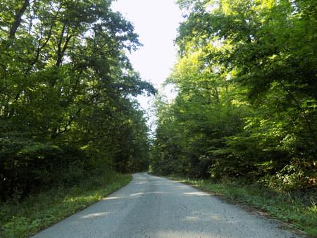 deciduous: Road in deciduous forest