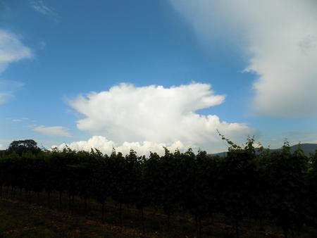 convective: Convective cloud
