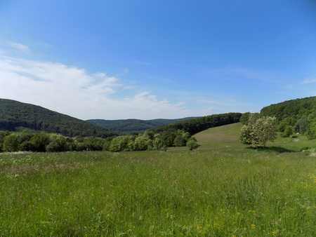 deciduous: Meadow, deciduous forest and sky