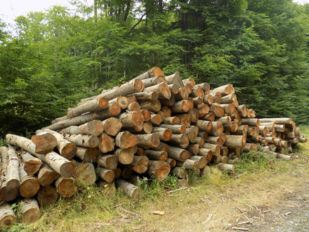 woodpile: Woodpile in forest