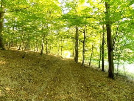 deciduous: Path in deciduous forest