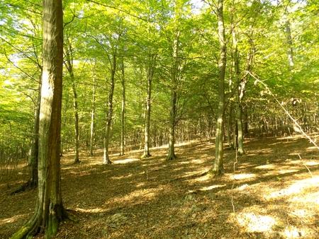 deciduous: Deciduous forest