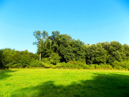 deciduous: Meadow and deciduous forest