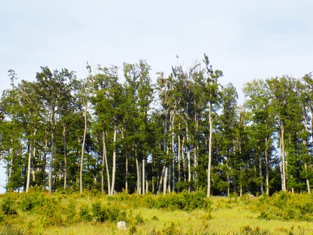 deciduous forest: Meadow and deciduous forest