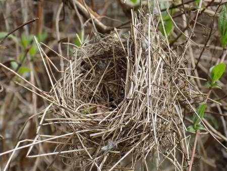 fledgling: Nest