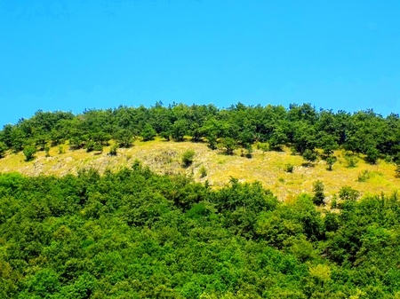 deciduous: Deciduous forest on hill