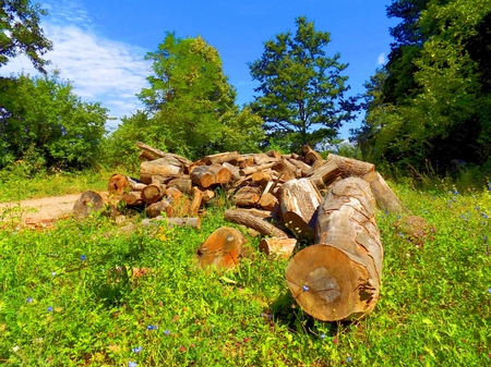 exploitation: Wood logs on meadow near deciduous forest after wood exploitation