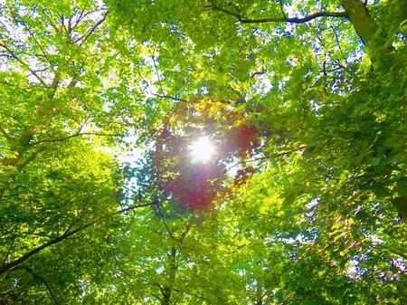 deciduous: Sun and deciduous forest