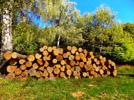 exploitation: Tree logs after wood exploitation on meadow near deciduous forest in wild nature