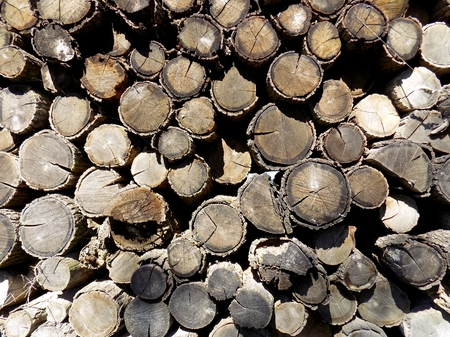 exploitation: Woodpile texture, pile of wood logs after wood exploitation background