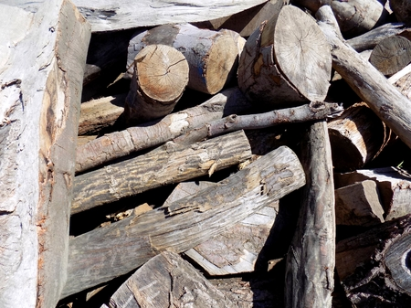 exploitation: Pile of wood logs after wood exploitation