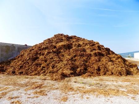 Hoge stapel van mest op de boerderij