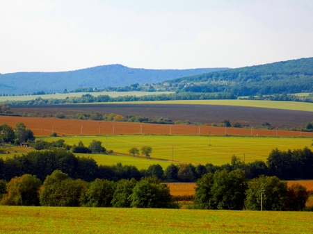 deciduous: Fields and deciduous forest Stock Photo