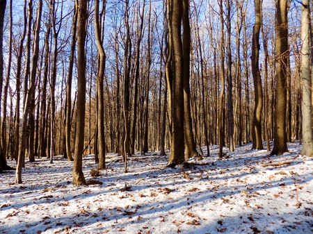 Snowy forest during winter