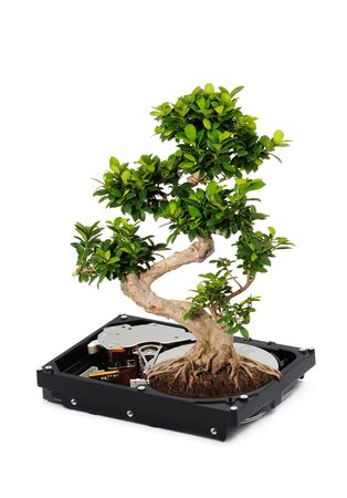 bonsai: Symbolic Picture fo Green IT Stock Photo