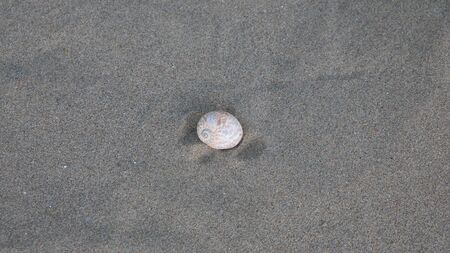 a snail shell in the sand Stock Photo