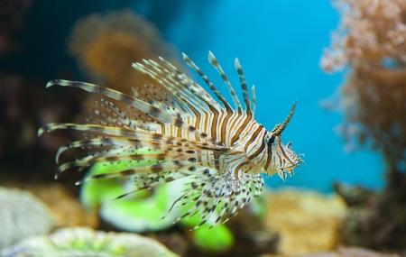 Photo of fish under water Stock Photo - 21195798