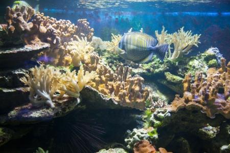 Photo of fish under water Stock Photo - 21195800