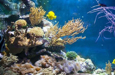 deepsea: Photo of fish under water