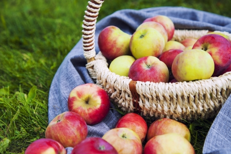 Organic Apples in the Basket. Stock Photo - 21751352