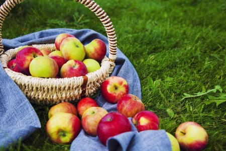 Organic Apples in the Basket. Stock Photo - 21751354