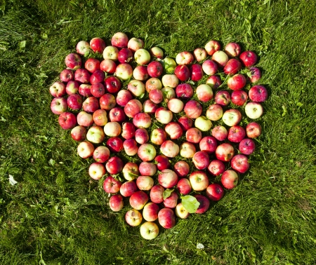 apples on the ground in the form of heart photo