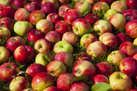 apples on grass Stock Photo - 21751373