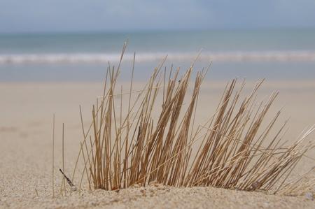 Andaman sea shore and dried grass photo