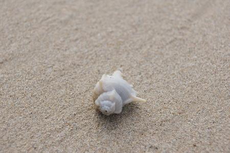 Andaman hermit crab shell photo
