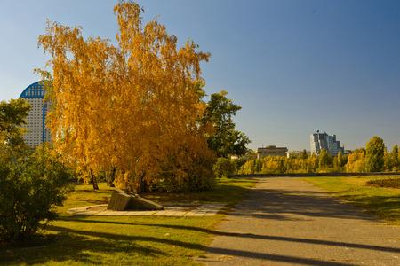 Yellowed birch Stock Photo