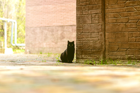Domestic black cat sits against the corner of a small stone house and stares intently in front of himself Imagens