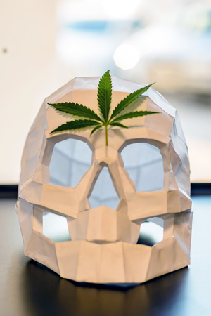 The green rosette of cannabis leaves lies on the forehead of the paper skull in front of the window with blurred glare from the sun. Imagens