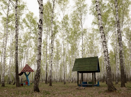 aspen grove: Picnic bench sits on lawn under canopy of birch trees. Stock Photo