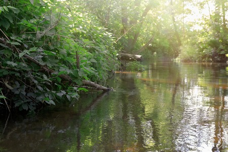 forest stream: Forest stream and green trees. Beautiful summer landscape