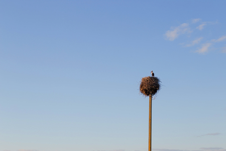 Stork in a nest with two young storks. Stock Photo