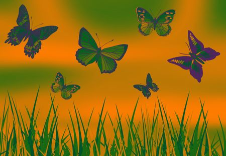 metamorphosis: butterfly picture on color full  ground with grass