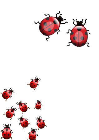 harmless: many Ladybugs isolated over white background
