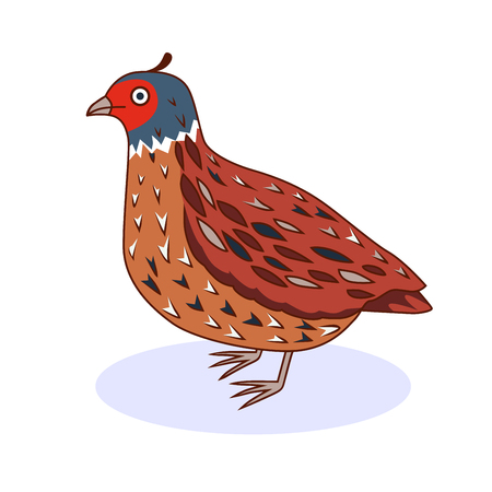Vector illustration - a bird quail. California Quail. Cartoon style. Иллюстрация