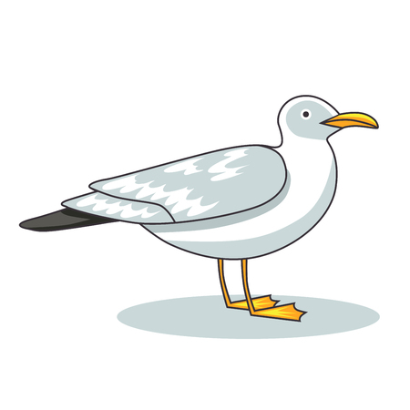 ornithologist: Gull flight bird and seabird gull. Sartoon looking gull. Sea gull, isolated on white background. Herring Gull for your journal article or encyclopedia.