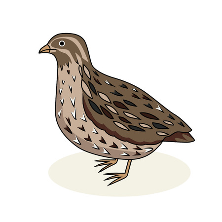 Vector illustration - a bird quail. California Quail. Cartoon style. Ilustracja