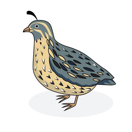 Vector illustratie - een vogel kwartel. De Kwartels van Californië. Cartoon stijl.