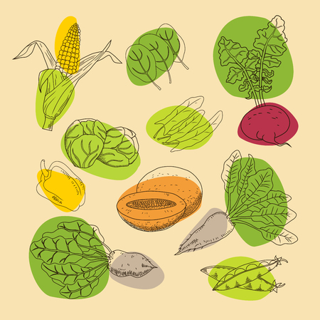 Set of garden and field vegetables and fruits. Herbs for soup, salad and other dishes. Vegetarian menu set. Linear style. Color illustration. Vector.