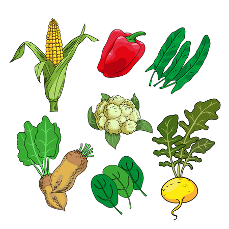Collection of high quality vector illustrations of herbs and vegetables. Vegetarian food set. Vegetarian menu set. Vector illustration. Cartoon illustration  graphic or web design layout. Ilustração