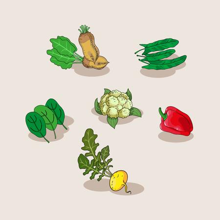 Hand-drawn collection of icons vegetables. Vegetarian food set. Vegetarian menu set. Vector illustration. Cartoon illustration  graphic or web design layout.